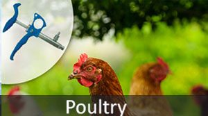 Poultry_mob