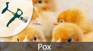 ThaMa-Vet double pox syringe