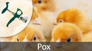 Pox Vaccinator