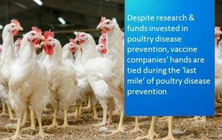 poultry syringes, poultry disease prevention, Thama-vet,